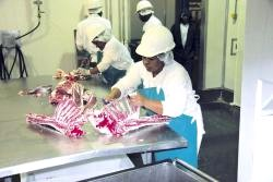 High quality lamb processed for the Norwegian market in Mariental, Namibia