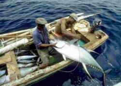Senegalese tuna fisheries